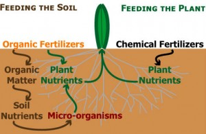 Organic Fertilizer Vs Chemical Fertilizer