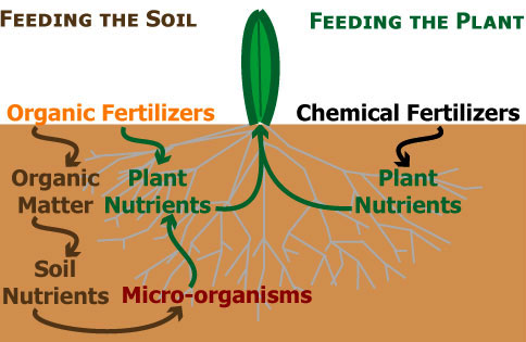 Services perma green lawn care for Mineral soil vs organic soil