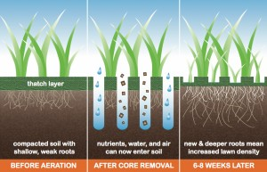 Core Aeration Diagram
